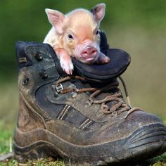 """This Shoe Stinks"" 