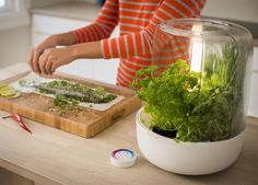 World of Accessories  KitchenGarden Basic by Fiskars, your little herb garden  |  This greenhouse goes in your kitchen and it'll basically take care of itself. |