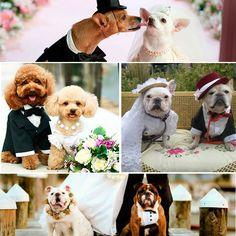 Mascotas en las bodas. Te animarías? #creamosemociones #bodasislamargarita