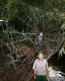 Gigantic spider's web discovered in Madagascar