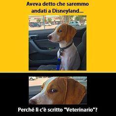 Portare il cane dal veterinario - Foto divertente