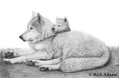 Wolves bond deeply in groups and usually stay together, helping each other for life...