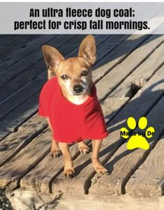 Sometimes a fleece coat is just right for cool but not necessarily cold weather. Or even better, layered under a winter coat on frigid days. Small Dog Coats, Small Dogs, Fleece Dog Coat, Autumn Morning, Dog Activities, Labradoodle, Little Dogs, Stay Warm, Winter Coat