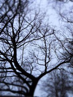 Älvstrandens träd