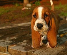cute dogs 16 Daily Awww: Dog lovers unite! (28 photos)