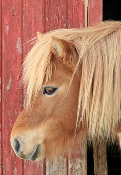 I know that if I had him he would probably be the bane of my existence. That said...I want him. Oh pony, you're a four letter word.