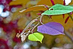 fotograf-az.ro Plant Leaves, Plants, Plant, Planets
