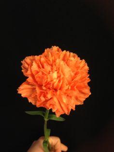 Oransje nellik - Dianthus Rose, Plants, Pictures, Pink, Roses, Flora, Plant, Planting, Pink Roses