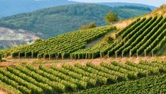 Tokaji borvidék! Gyönyörű látvány, ugye? Hungary Heart Of Europe, Prague, Hungary, Vineyard, Outdoor, Wine, Beautiful, Outdoors, Outdoor Games