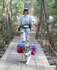hiking with dogs - Google Search