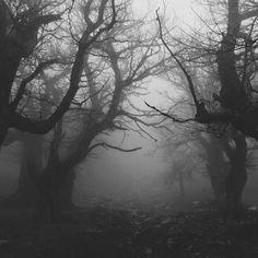 b, black and white, fog, forest, mist