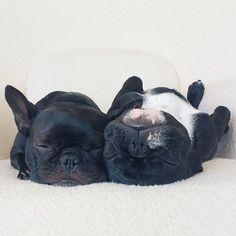 Dogs sleep #pretty #sofa
