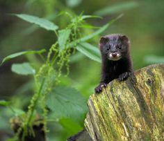 pin von judy bush auf engangered animals germany