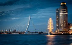 Download wallpapers Erasmus Bridge, Rotterdam, Netherlands, city lights, cable-stayed bridge