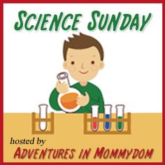 Science Sunday: beaver activities.