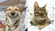 the difference between dogs and cats!...This is why I love dogs!!