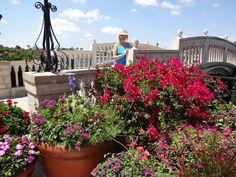 No shortage of sensational blooms at the Epcot Flower & Garden Festival!