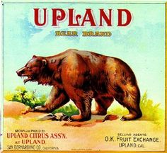 Upland, San Bernardino County, CA -Vintage Bear Orange Citrus Fruit Crate Box Label Advertising Art Print. Printed on highest quality stock soft gloss paper. Actual image dimensions are approximately 10 x 11 inches.