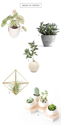 A guide to bring in Spring with plants for decor, fresh air, and new surroundings...