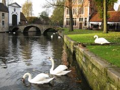 """A """"Venice of the North"""", Bruges is filled with charming swan-filled canals..."""