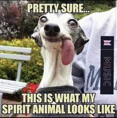 That's my spirit animal. Funny Shit, Haha Funny, Funny Cute, Hilarious, Funny Posts, Funny Stuff, Funny Animal Memes, Funny Animal Pictures, Funny Animals