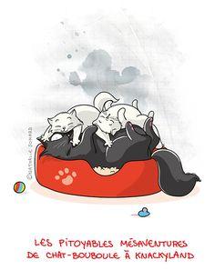 Petit précis de Grumeautique - Blog illustré: Chat-Bouboule in Knackyland