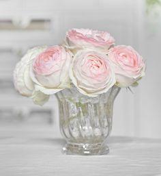 rosier Pierre de Ronsard  aka...Eden.  Can't wait for mine to bloom!