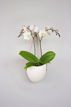 Porcelain  leather hanging planter by lightandladder on Etsy, $50.00