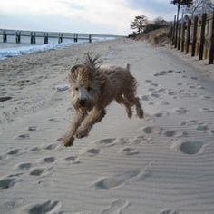 """2007 """"Capture the Coast"""" Photo Contest Honorable Mentions 