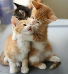 """Big brother sometimes hugs me too tight but I loves him…."" – awwwww just too cute! - Spoil your kitty at www.coolcattreehouse.com"