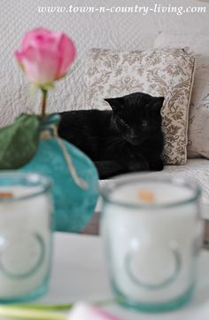 Felix the Cat during our candle making session