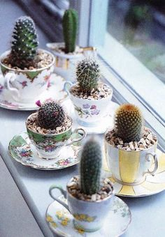 decorar con tazas, plantas y cactus