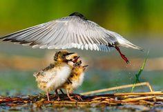 """Lacul Văcăreşti din Bucureşti. Delta dintre blocuri, vizitată de englezi: """"Animale şi plante uluitoare"""" - GALERIE FOTO - Mediafax"""