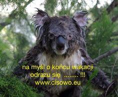 Cisowo,Poland - www.cisowo.eu