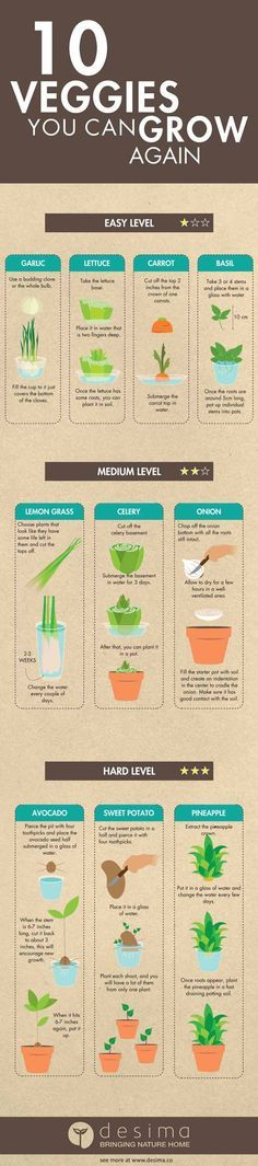 10 Vegetables You Can Grow From Scraps | Serve Fresh Vegetables & Spices Everyday with these EASY DIY Gardening Tutorials by Pioneer Settler at  http://pioneersettler.com/vegetables-grow-from-scraps/
