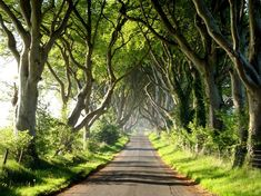 The Dark Hedges (Ireland), are many 300 yr old Beech trees that have become intertwined to create this spectacular avenue.