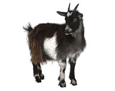 Goat Instant Download. Full Color DIY by DigitalArtDownloads