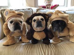 Born to be a bear. Not a doggy!
