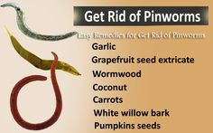 Pinworms are small insects which are alive in our bally especially in school going children's because they eat things from there which causes of pinworms