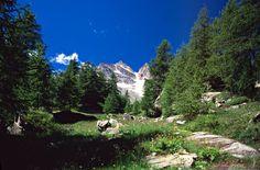 gran paradiso flora e fauna