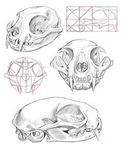 dog skull diagram dog skull anatomy model