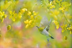 Happy gardener by FuYi Chen Love Birds, Beautiful Birds, Tree Mushrooms, Spring Birds, White Eyes, Exotic Birds, Nature Wallpaper, World Best Photos, Amazing Nature