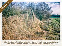 Kunst vom Feld: Wildwuchs – www.kunstvomfeld.de