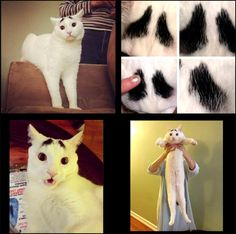 A cat with eyebrows on http://www.drlima.net