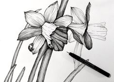 How to Draw Beautiful Floral Art with Pens Outline Drawings, Pencil Art Drawings, Art Drawings Sketches, Easy Drawings, Flower Art Drawing, Flower Drawing Tutorials, Floral Drawing, Painting Tutorials, Acrylic Painting Techniques