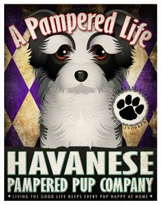 bd24d61dc93c Personalized Havanese Print... So doing this! Too cute!