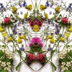 cagd · Polina Sharma · Flower Power