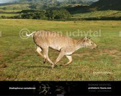 Prehistoric Wildlife, Ice Age, Extinct, Fauna, Mammals, Grande, Paleo, Environment, Creatures
