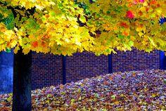 awesome fall tree
