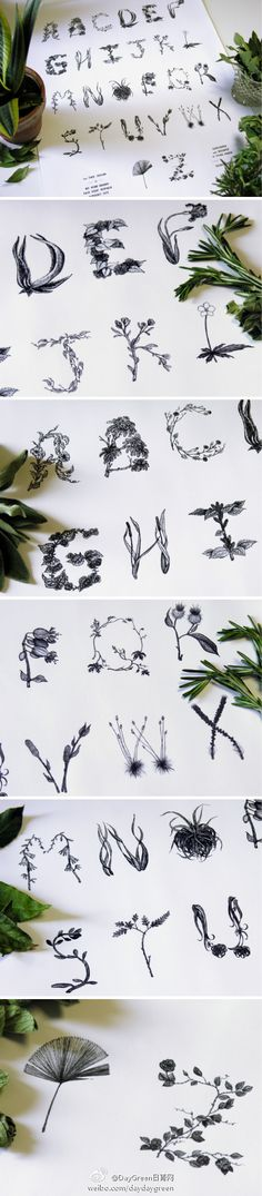 botanical font- my favorite of all versions of type I have ever seen. this is incredible.